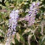 gardasee bild 098 150x150 - Fototour am Gardasee