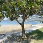 gardasee bild 114 150x150 - Fototour am Gardasee