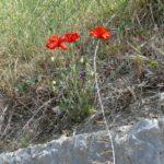 gardasee bild 155 150x150 - Fototour am Gardasee